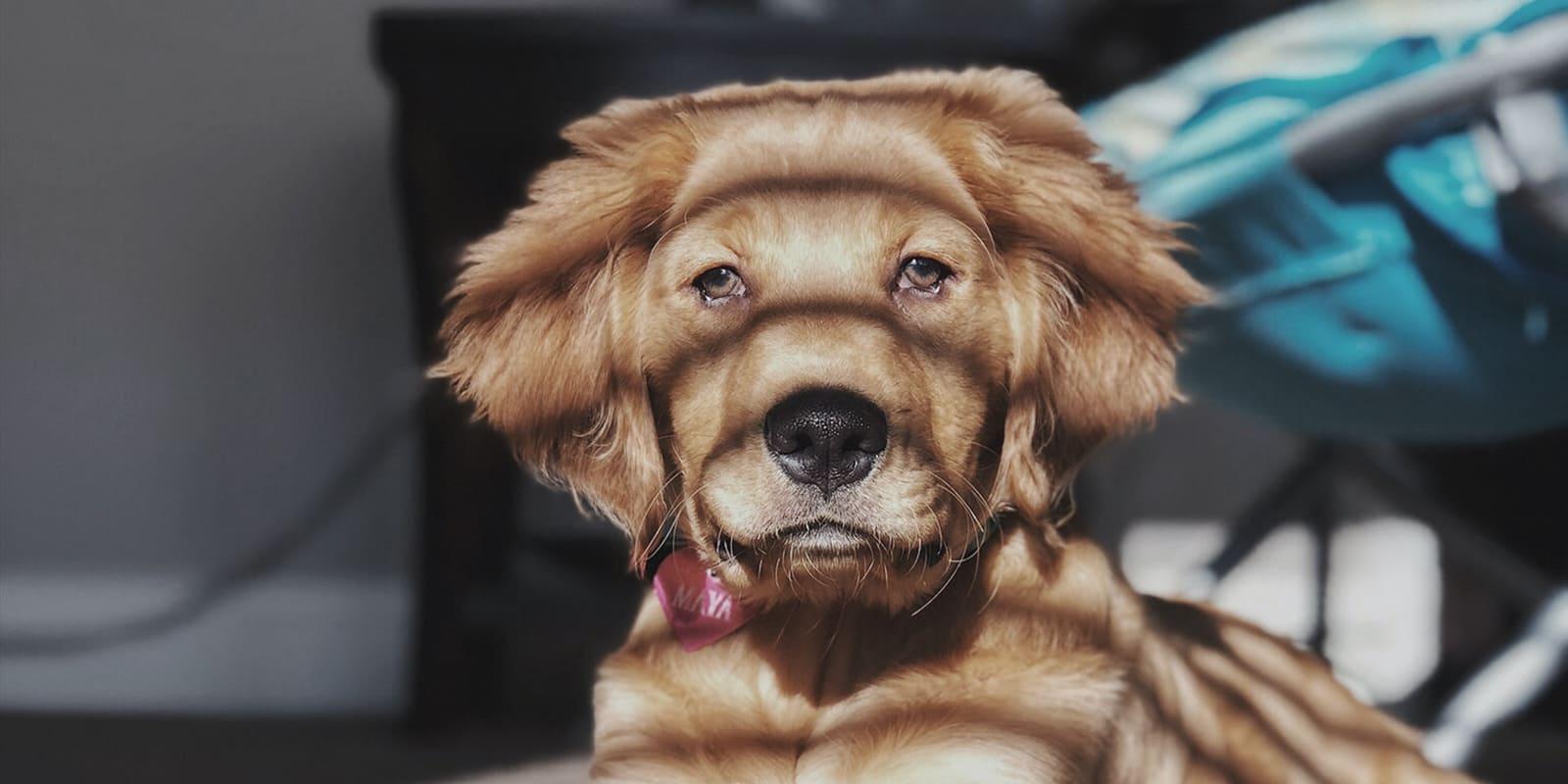 GERHARTS - Regeln für Hundehalter